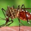 El Virus del Zika
